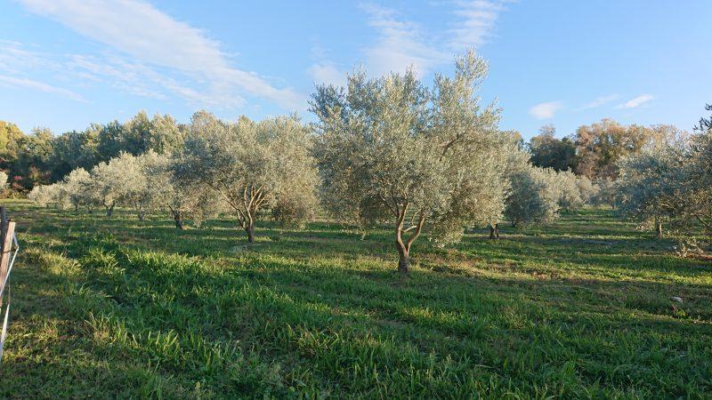 Domaine de la Fanette – producteurs d'huile d'olive AOP-BIO – vente directe à la ferme –